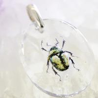 プラチナコガネ(beetle009)