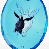 アオウミガメ(turtle167)