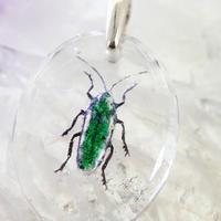 タマムシ(beetle011)