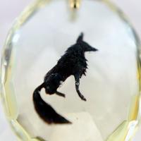 黒狐(fox007)