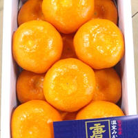 佐賀県産 温室みかん 唐津 (1kg/12個入) 税込