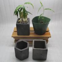 黒信楽焼きS鉢植え替えオプション