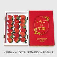 プレミアムいちご【12〜15玉】