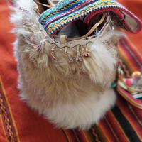 alpaca_bag_2016_milktea×white