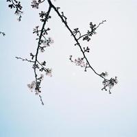 【MCB551705】BUN YOKOYAMA「JAPAN」