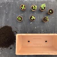 谷口めぐみ農園のベランダファーム用プランターキットハーブ苗7種+種