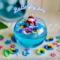 青いハーブティー・バタフライピー|オブジェ