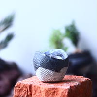 joint pot   安西桂   ×   安西岳郎   親子鉢〝土の子″    no.52439