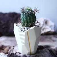 群星冠 Euphorbia stellispina   no.021