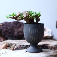 ユーフォルビア    イトレメンシス    Euphorbia itremensi  no.019