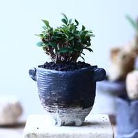 ユーフォルビア   花キリン  八房性   Euphorbia milii  no.90625