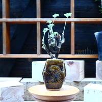 ぺラルゴ二ウム   エキナツム/Pelargonium  lechinatum   no.72518