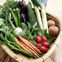 季節の野菜セット(Sサイズ/1~2人分)