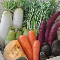 定番のお野菜を特別美味しく。無農薬・無化学肥料もうり農園の野菜ボックス