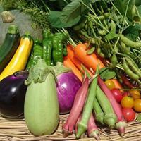 野菜ソムリエ資格の農家。無農薬・無化学肥料がけ山農園の野菜ボックス