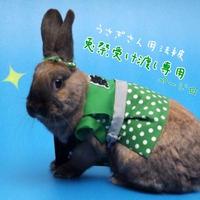 うさぎさん用法被*兎祭2019受け渡し専用