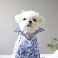 mulch stripe shirt . [ blue ]