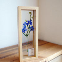 mother's day  pressed flowers / DELPHINIUM