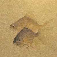 松平一民 「黒金魚」    23,0×13,5cm         Matsudaira Kazutami