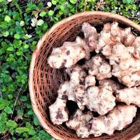 菊芋 1kg [BIG FAMILY FARM] made in 佐賀県