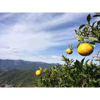 星空の柚子 1kg  [潮と空農園] made in 高知県