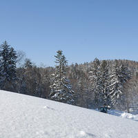北海道大雪山 旭岳の魅力を紹介。クロスカントリースキーオンライン体験!