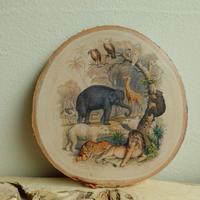 Animals /madeva ウォールデコ