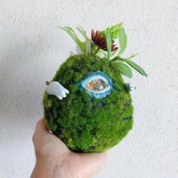 one eye moss ball / Msize