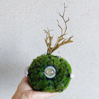 one eye  moss ball / A