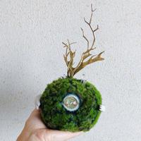 one eye  moss ball / A