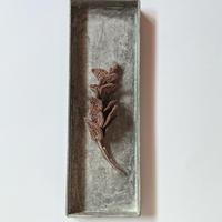 Shizuka, d.s.|Eucalyptus《Tuffee》