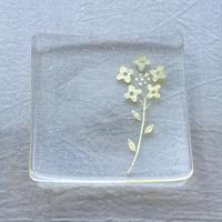 早崎志保|銀の景色四角皿・菜の花
