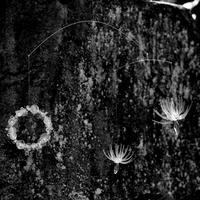 柳原麻衣|モビール「苔の輪とワタゲ」 M2【受注商品:8月中発送】