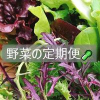 なら野菜の定期便はじめました!