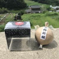 【縁起物】合格祈願花火【2号玉サイズ】