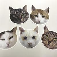 猫型ポストカード  第2弾