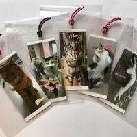 阿部『猫』商店 オリジナルしおり お好きなカード付き