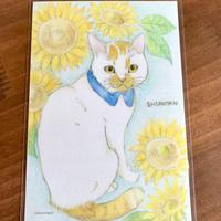 シロたんイラストポストカード