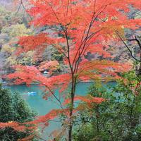 9話 「日本中の紅葉・大集合!!」2020年10月29日