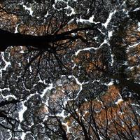 8話 「木の生き方 ③」2020年10月22日