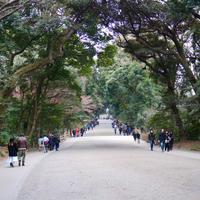 18話「100年前の日本、新たな聖地と森の遷移・明治神宮」2020年12月31日