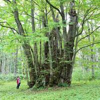 6話「木の生き方② ~ 枝ぶり、根ばり、蘖( ひこばえ )」2020年10月8日