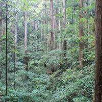 4話 「森と林、庭と公園」