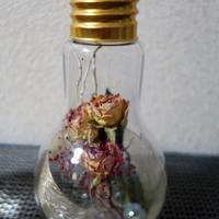 電球型ハーバリウム
