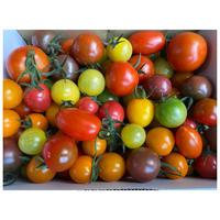 カラフルトマトS  (1kg)