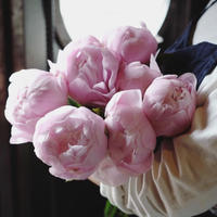 『お花の定期便』〜臨時便〜  ---芍薬のミニブーケ---