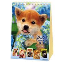 2021年 森田米雄・まるごと柴犬 卓上カレンダー ACL-543