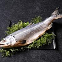 【10尾限定】超特選新巻鮭 1尾(オホーツク産の天然鮭 幻の大ぶり約3.8kg)【AU-1】