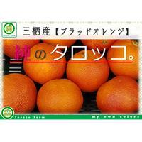 『純のタロッコ。』三栖産ブラッドオレンジ【4kg:送料込】
