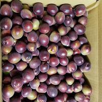 紫宝梅™『ミスなでしこⓇ』4kg